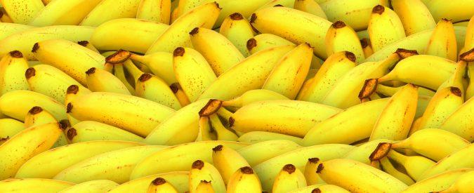 Banane, tra potassio e cure anticancro. Due bufale dasfatare